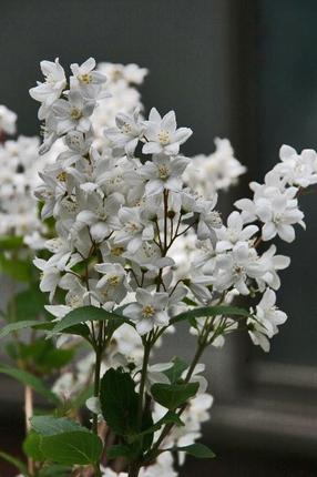庭の花-015.jpg