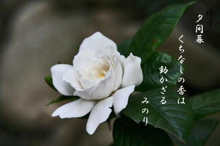 梔子の花-015.jpg