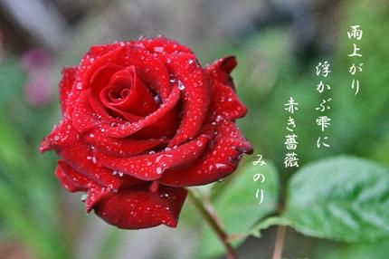 雫バラ-059~~.jpg