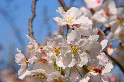 ~~桜.jpg