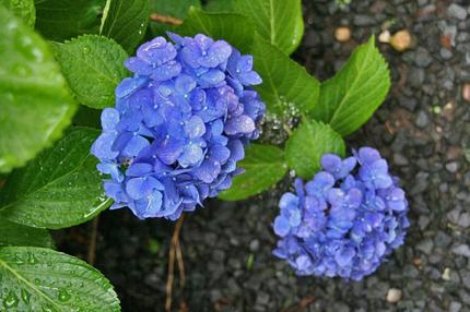 ブルー~~.jpg