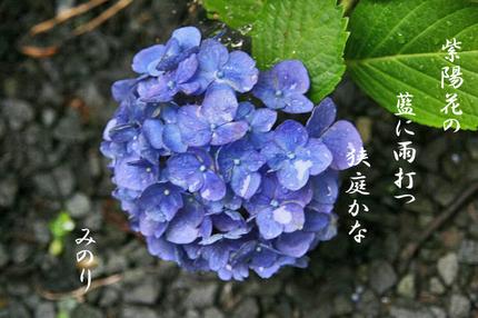 雨に蒸れ紫陽花~~-013.jpg