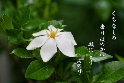 くちなしの花-079.jpg