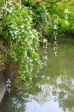 のバラ129.jpg