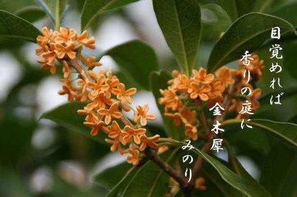 ススキ-117.jpg