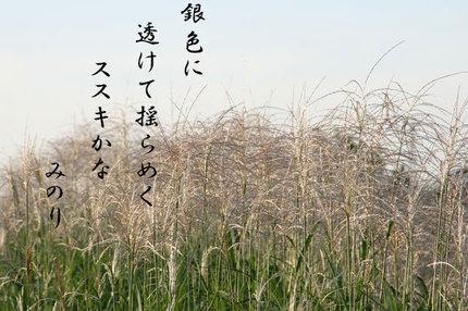 ススキ=-050.jpg