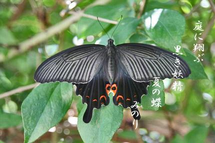 夏の蝶-064.jpg