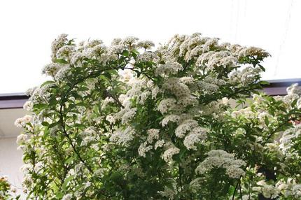 庭の花-011~~.jpg