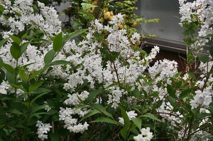 庭の花-016.jpg