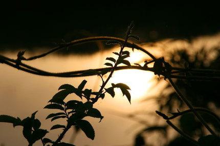 日の出-068.jpg