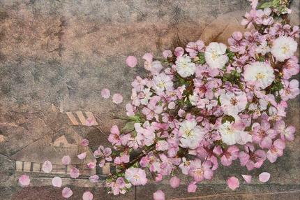 桜 -026~~.jpg