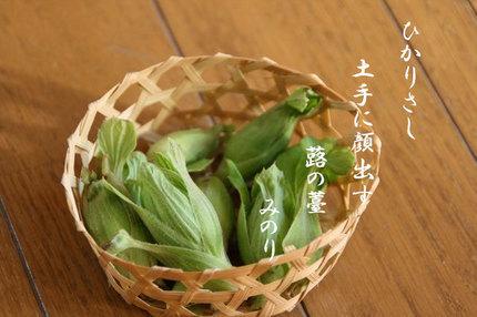 福寿草-001.jpg