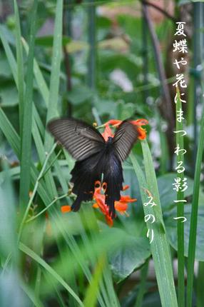 花-003~~.jpg