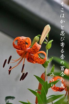 花-028~~.jpg
