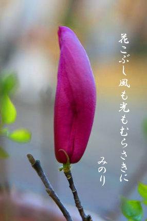 花-078.jpg