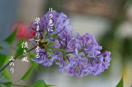 花-082.jpg