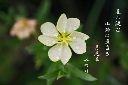 草花-045.jpg