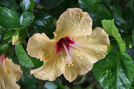 雨雫-015~~.jpg