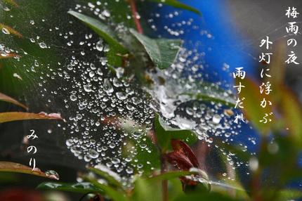 雨雫-109.jpg