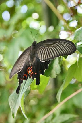 黒き蝶-105.jpg